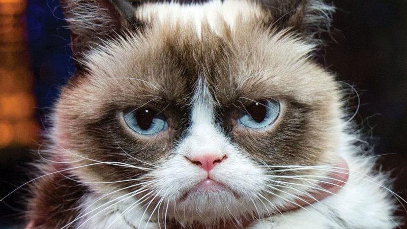 У мемов тоже есть права: владелица самого популярного кота отсудила $ 700 тысяч